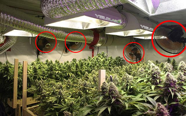 oscillating-fans-for-medical-cannabis-grow