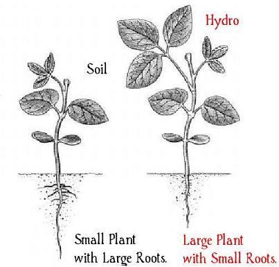 soil-hydroponic