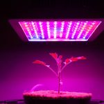 Mars Hydro 300W LED Grow Light Review: Things You should know before picking