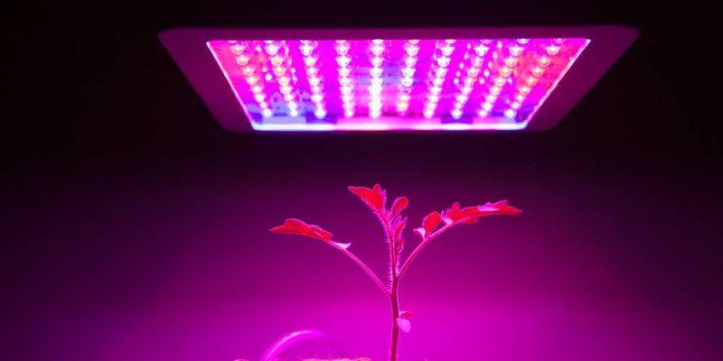 Marshydro-300W-LED-Grow-Light-3