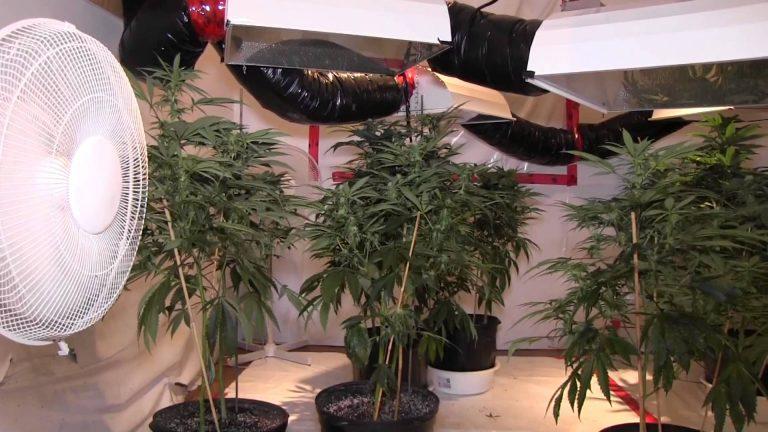 How To Setup A Low Budget Grow Room?