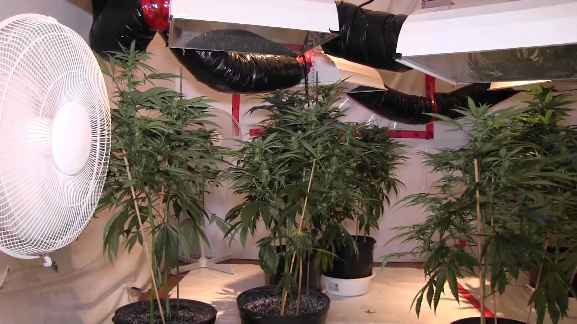 Design my grow room