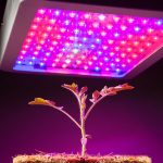 Best Full Spectrum Led Grow Lights of 2018: The Authentic Top 10 Reviews