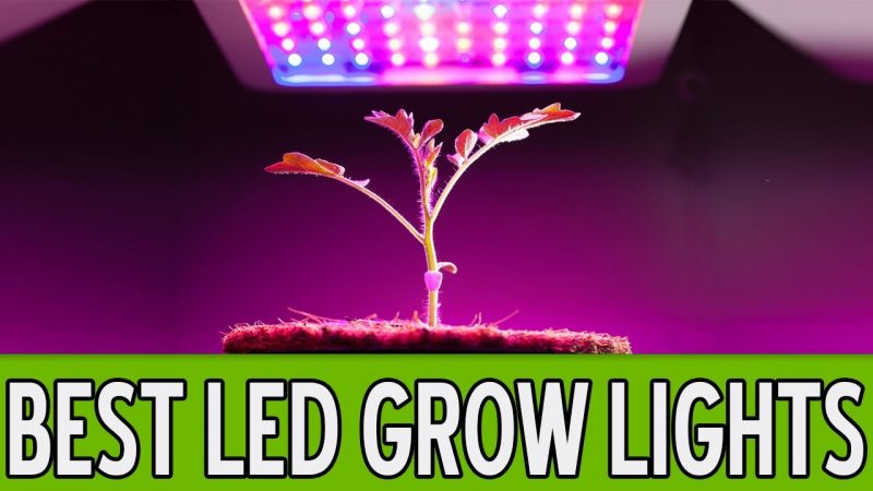 Best Led Grow Lights For Weed 2019 | Reviews By (Experts In