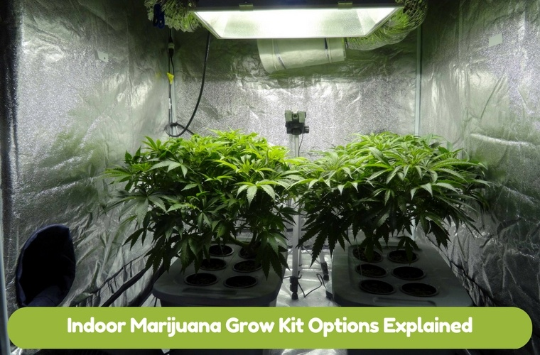 Indoor Marijuana Grow Kit