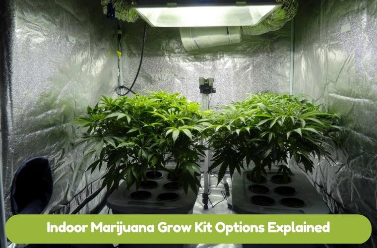 Indoor Grow Kit