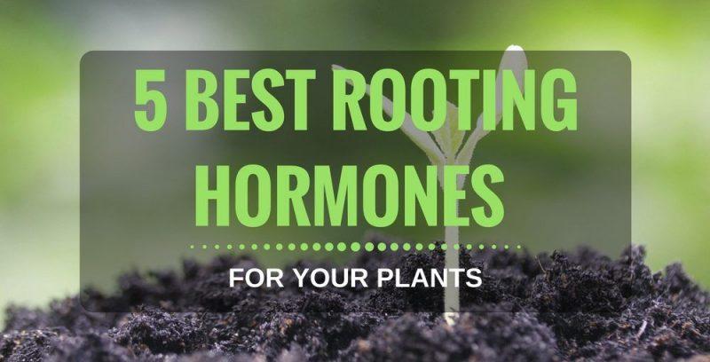 best-rooting-hormones