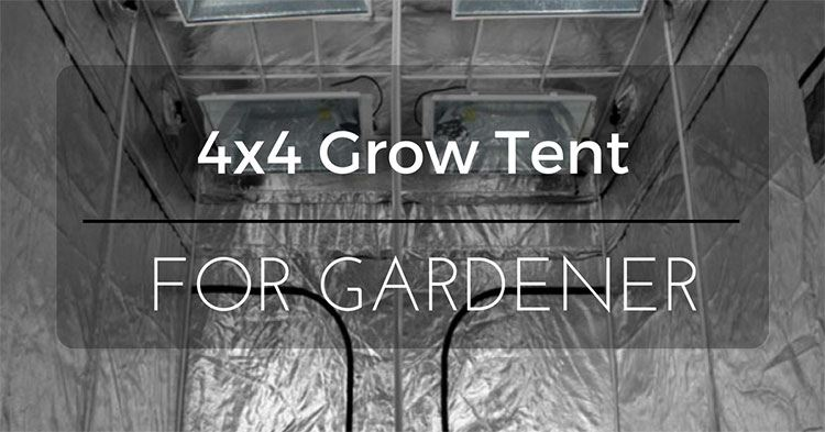 6 best 4x4 grow tent reviews 2018 complete review