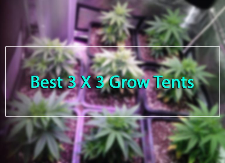 Best 3×3 Grow Tent Package In 2019 Reviews