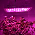 10 Best 600W LED Grow Light Of 2021 Reviews