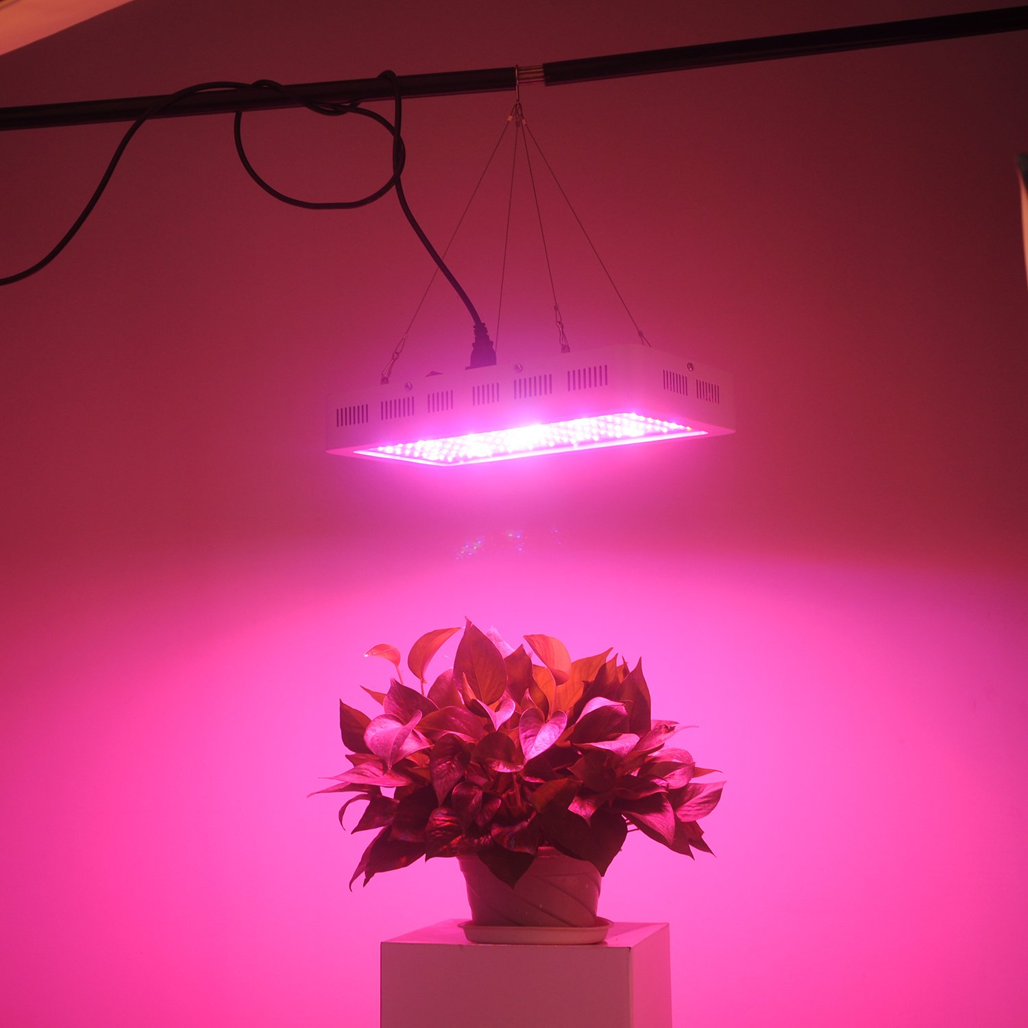 RECORDCENT LED Grow Light full review
