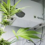 Best Humidifier / DeHumidifier For Grow Room/Grow Tent 2020 Reviews