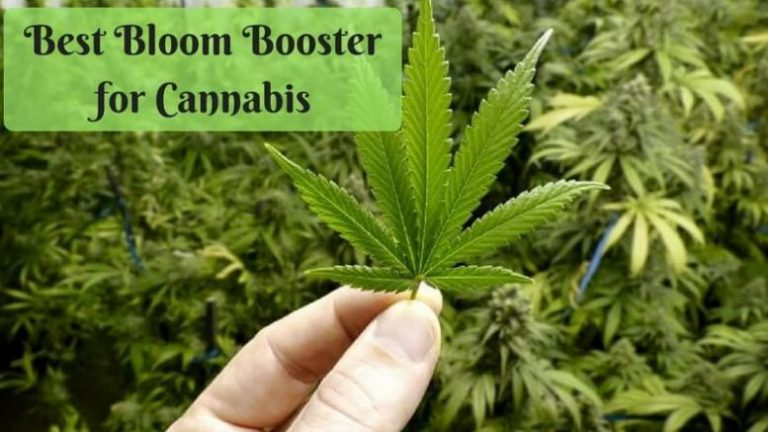 Best-Bloom-Booster-for-Cannabis