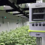 10 Best Hygrometers For Grow Room [2021 Review ]