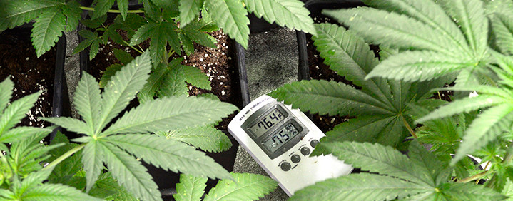 Best-Temperature-And-Humidity-Controllers-For-Growing-Cannabis