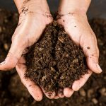 10 Best Soil for Growing Marijuana Indoor [2019 Reviews]