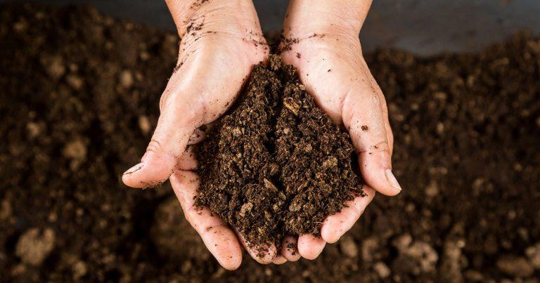 10 Best Soil for Growing Marijuana Indoor [2019 Reviews]