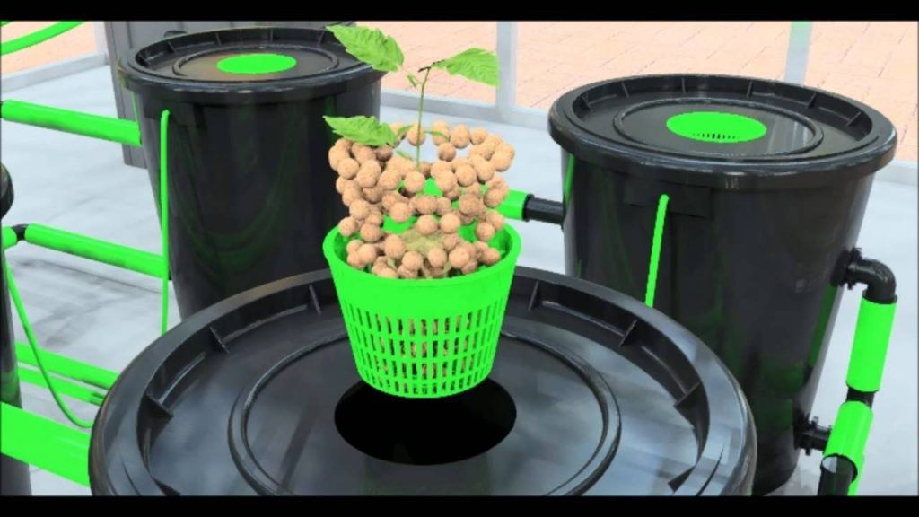 Best DWC Hydroponic System (Deep Water Culture) [2019 Reviews & Guide]