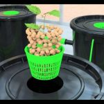 Best DWC Hydroponic System (Deep Water Culture) [2021 Reviews & Guide]