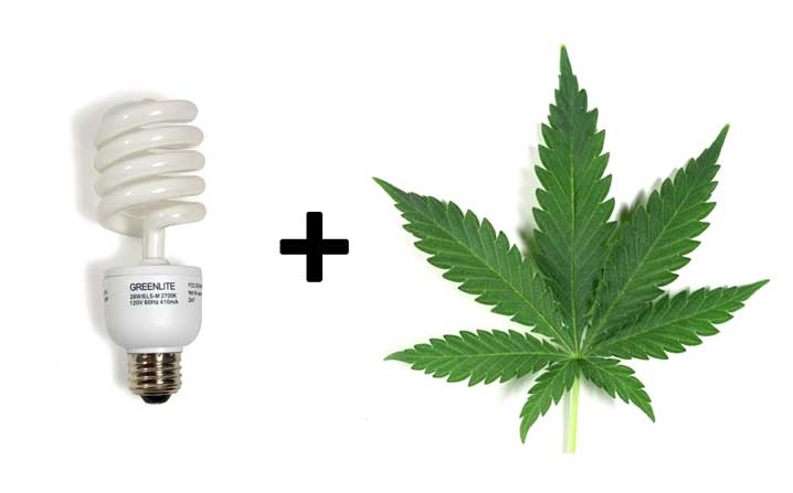 6 Best Cfl Grow Lights For Growing Cannabis On 2020