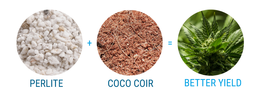 cannabis with coco coir