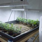 Best Heaters for Cannabis Grow Room & Grow Tent [2020 Reviews]