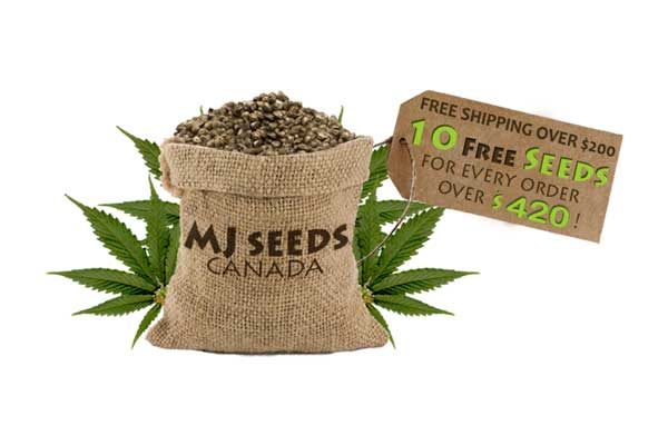 mj-seed-bank