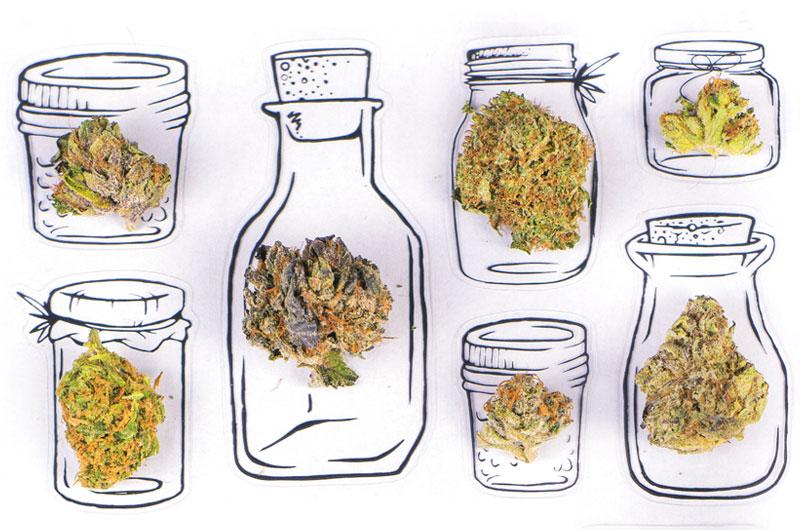 Overnight Soaking of Marijuana Seeds in Water