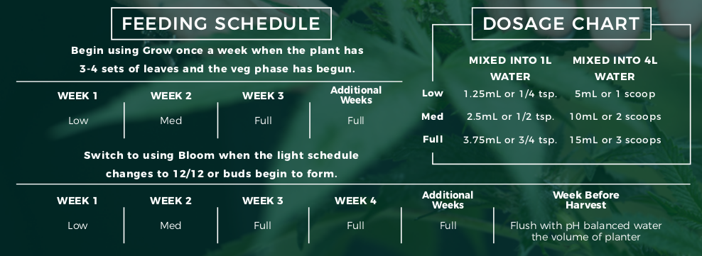 When Should You Start Feeding Your Marijuana Plants