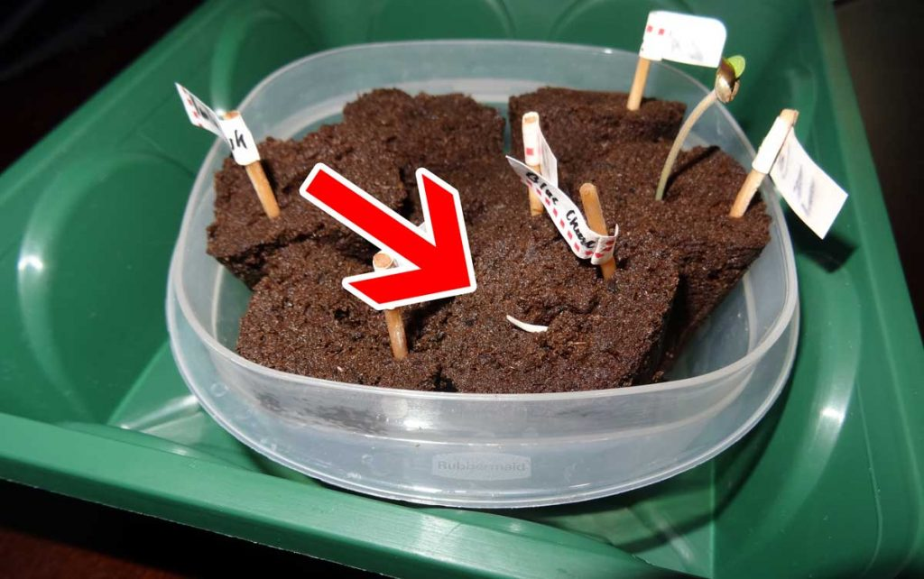 example-cannabis-seedling-roots-upide-down