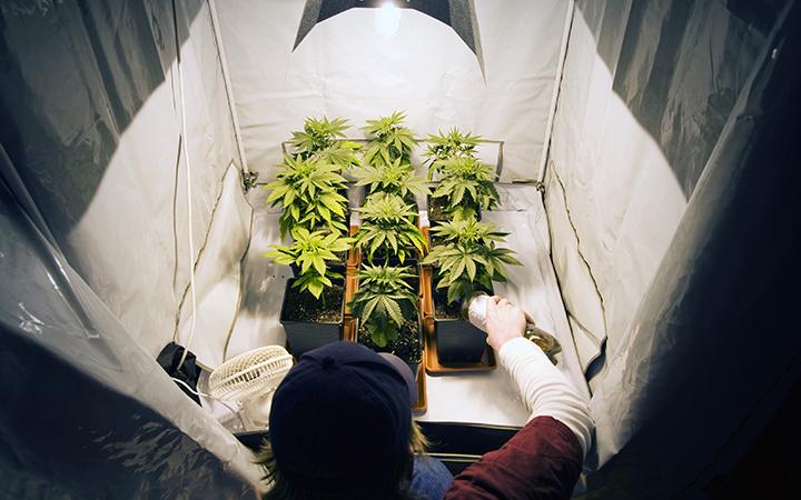 Growing Marijuana indoor