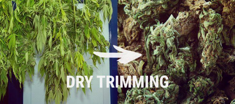 DryTrimming