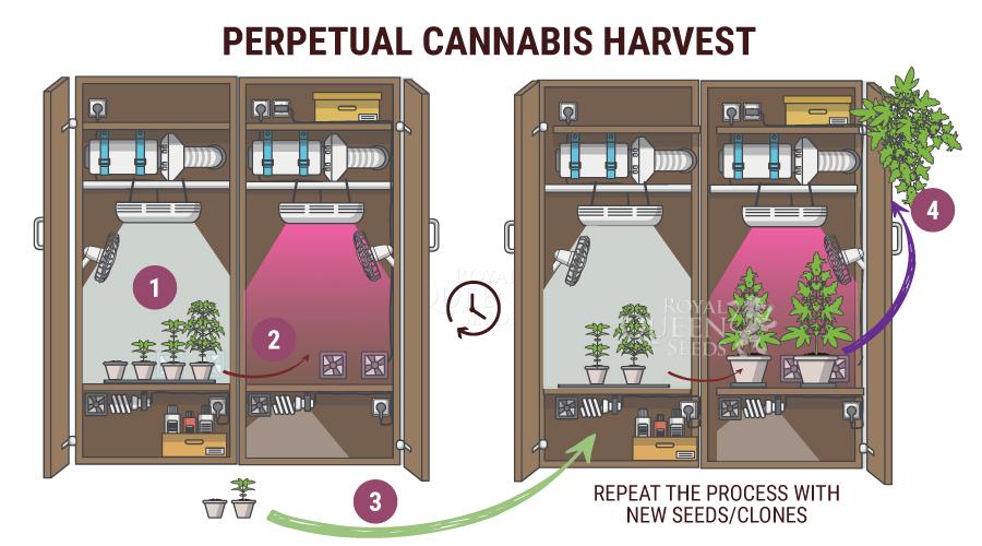 Perpetual Harvesting