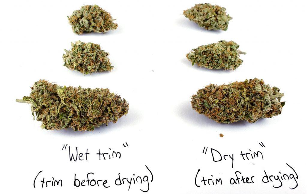 dry-trim-vs-wet-trim-cinderella