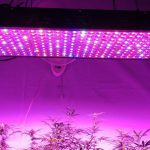 Best 300W LED grow Lights Reviews