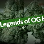 OG Kush Marijuana Strain Review [Everything You Need to Know]