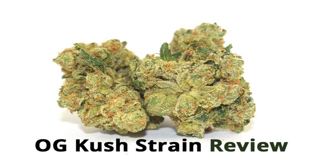 OG-Kush-Strain-Review