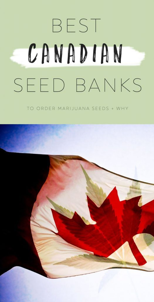 a few days away competitive price new list Best Canadian Seed Banks | Buy Marijuana Seeds Online