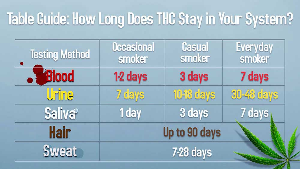 how-long-thc-stays-in-system