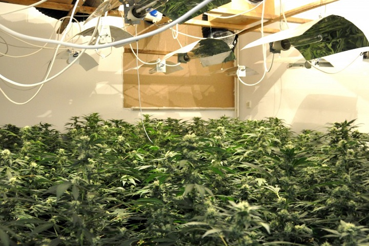 Build-Your-Indoor-Marijuana-Grow-Room