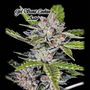 Girl Scout Cookies Auto Feminized Seeds 2