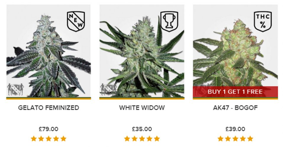 MSNL Seeds Best Selling Strains