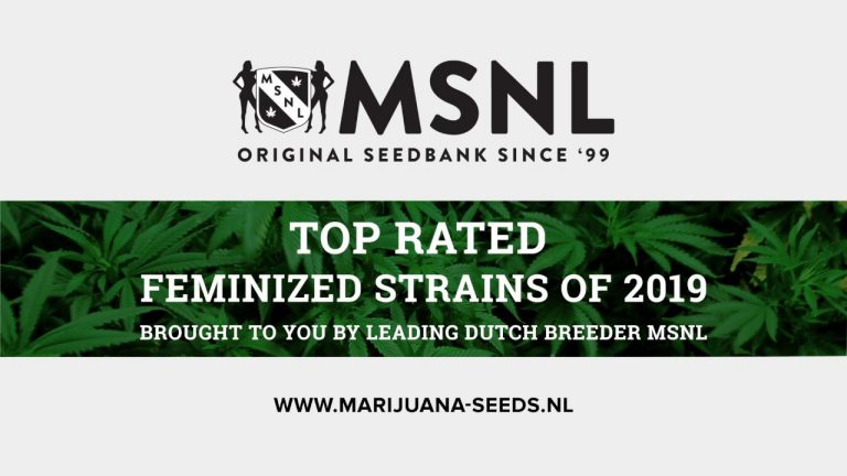 MSNL Seeds Review