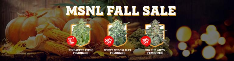 MSNL_Fall_Sale