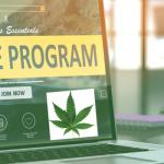 11+ Best Marijuana Affiliate Programs To Joint