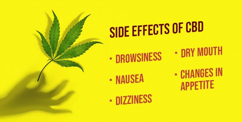 Cannabis study reveals how CBD offsets ...