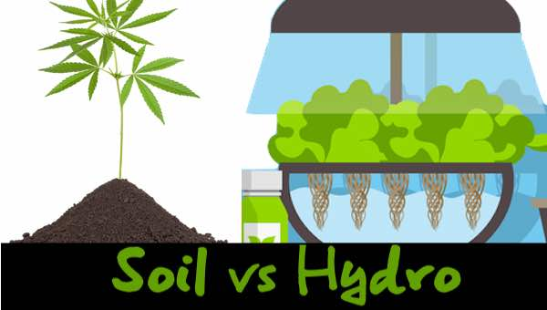 hydro-vs-soil-marijuana