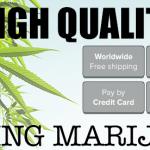 Ilovegrowingmarijuana (ILGM) Marijuana Seed Bank Review