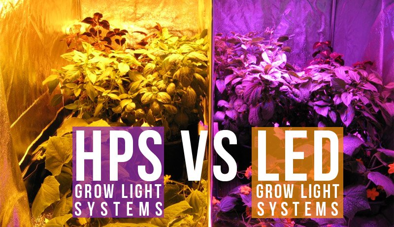 led grow lights vs hps