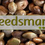 Seedsman Seeds Banks Reviews | Is Seedsman Legit?